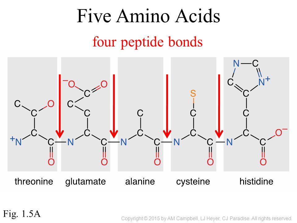 Five Amino Acids Fig.