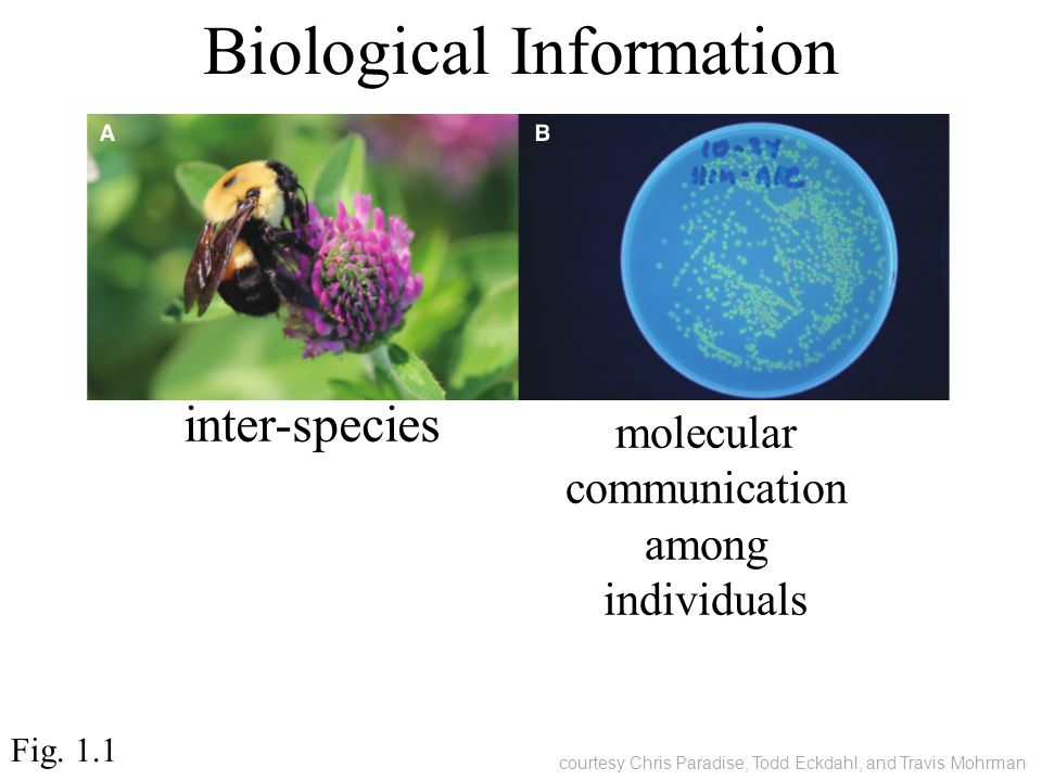 Biological Information Fig. 1.1 courtesy Chris Paradise, Todd Eckdahl, and Travis Mohrman