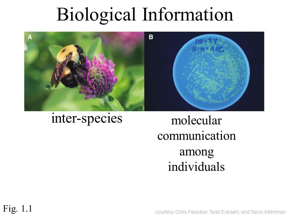 Biological Information molecular communication among individuals inter-species Fig.
