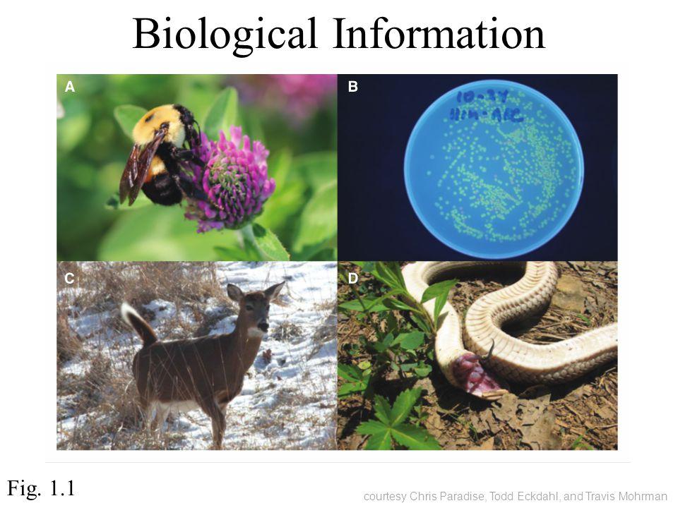 Biological Information Fig. 1.1 courtesy Chris Paradise, Todd Eckdahl, and Travis Mohrman