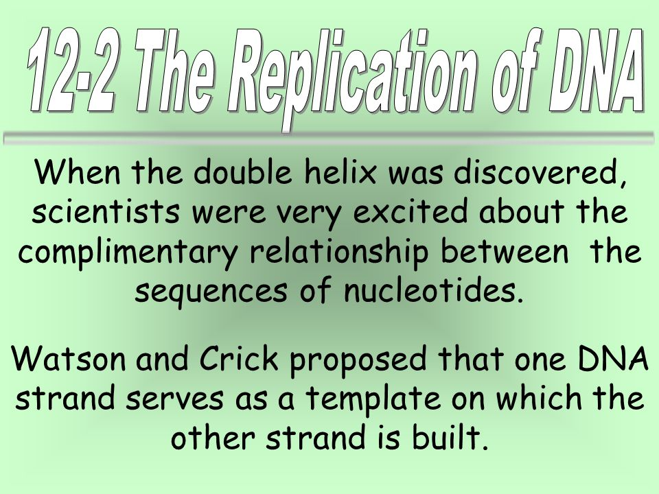 In the diagram of DNA below, the helix makes it easier to visualize the base-pairing that occurs between DNA strands