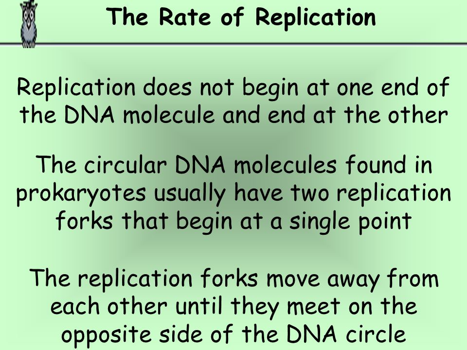 Checking for Errors In the course of DNA replication, errors sometimes occur and the wrong nucleotide is added to the new strand. An important feature
