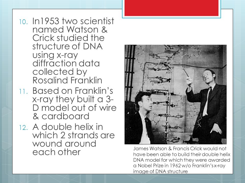 10. In1953 two scientist named Watson & Crick studied the structure of DNA using x-ray diffraction data collected by Rosalind Franklin 11. Based on Fr