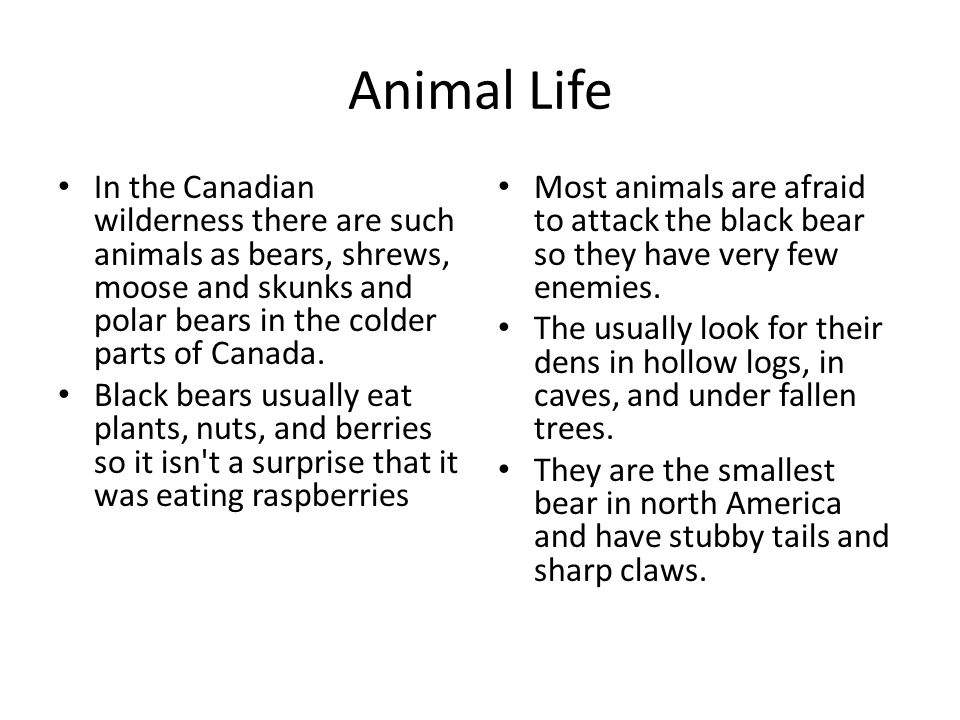 Animal Life In the Canadian wilderness there are such animals as bears, shrews, moose and skunks and polar bears in the colder parts of Canada.