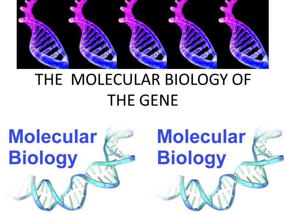 THE MOLECULAR BIOLOGY OF THE GENE EMERGING VIRUSES – AIDS (HIV) – FLU – EBOLA – HANTA HOW DO VIRUSES ARISE.