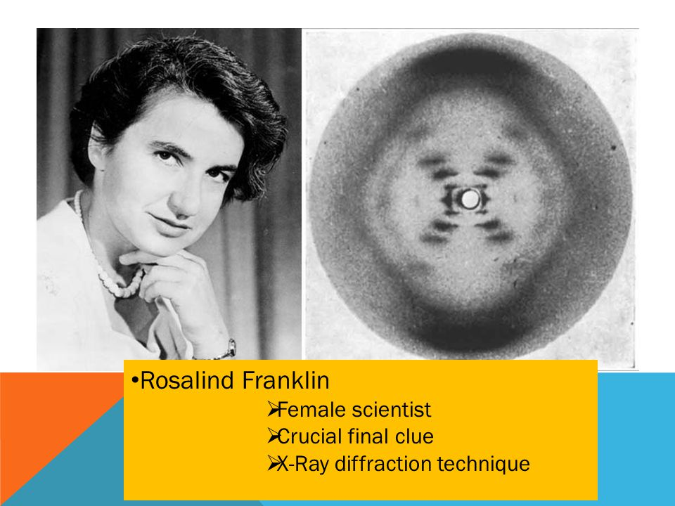 Rosalind Franklin  Female scientist  Crucial final clue  X-Ray diffraction technique