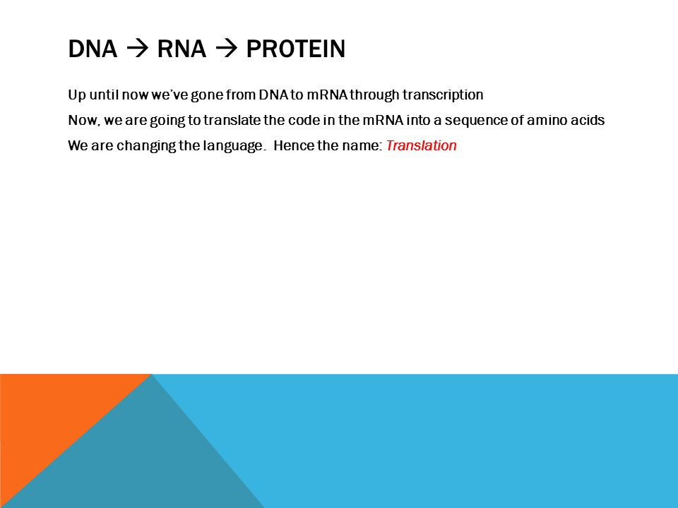 DNA  RNA  PROTEIN Up until now we've gone from DNA to mRNA through transcription Now, we are going to translate the code in the mRNA into a sequence of amino acids We are changing the language.
