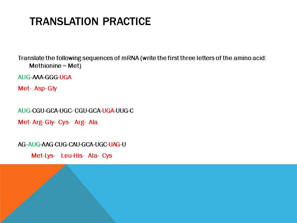 TRANSLATION PRACTICE Translate the following sequences of mRNA (write the first three letters of the amino acid: Methionine = Met) AUG-AAA-GGG-UGA Met- Asp- Gly AUG-CGU-GCA-UGC- CGU-GCA-UGA-UUG-C Met- Arg- Gly- Cys- Arg- Ala AG-AUG-AAG-CUG-CAU-GCA-UGC-UAG-U Met-Lys- Leu-His- Ala- Cys