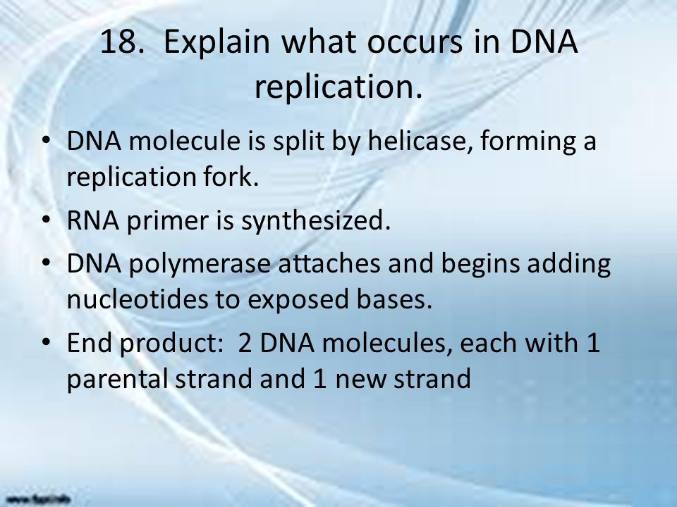 18. Explain what occurs in DNA replication. DNA molecule is split by helicase, forming a replication fork. RNA primer is synthesized. DNA polymerase a