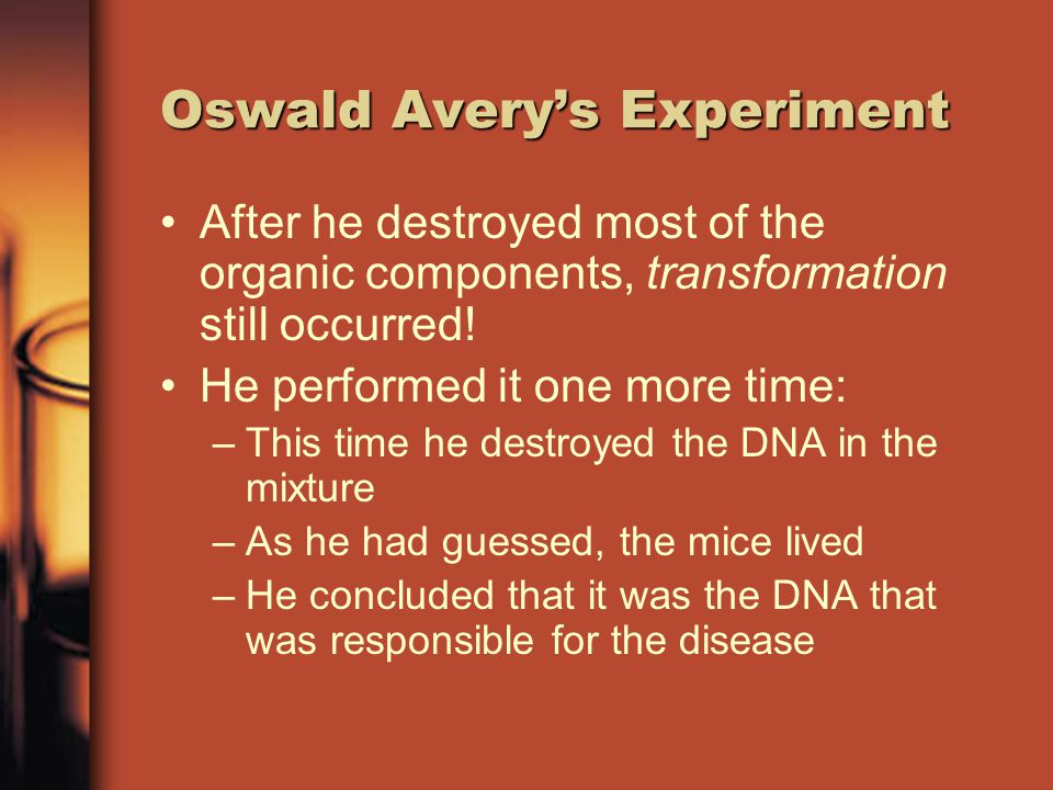Oswald Avery's Experiment In 1944 Avery repeated Griffith's experiment –He changed it by creating an extraction of the combined bacteria and treating it with enzymes –These enzymes destroyed all of the proteins, fats, carbs, and RNA –Leaving only the DNA!!