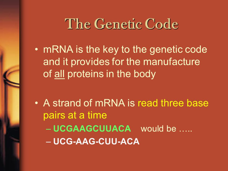 The Genetic Code Proteins are assembled in polypeptides –These are long chains of amino acids –There are 20 different types of amino acids –The properties of proteins are determined by which order these amino acids are joined