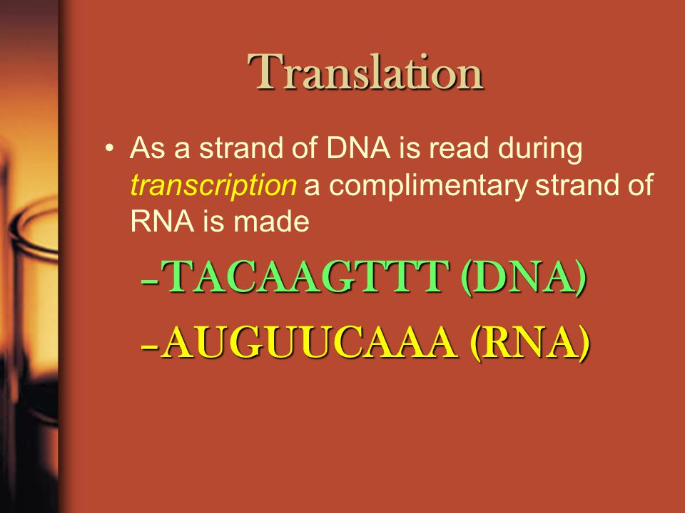 Messenger RNA : Messenger RNA is transcribed in the nucleus.