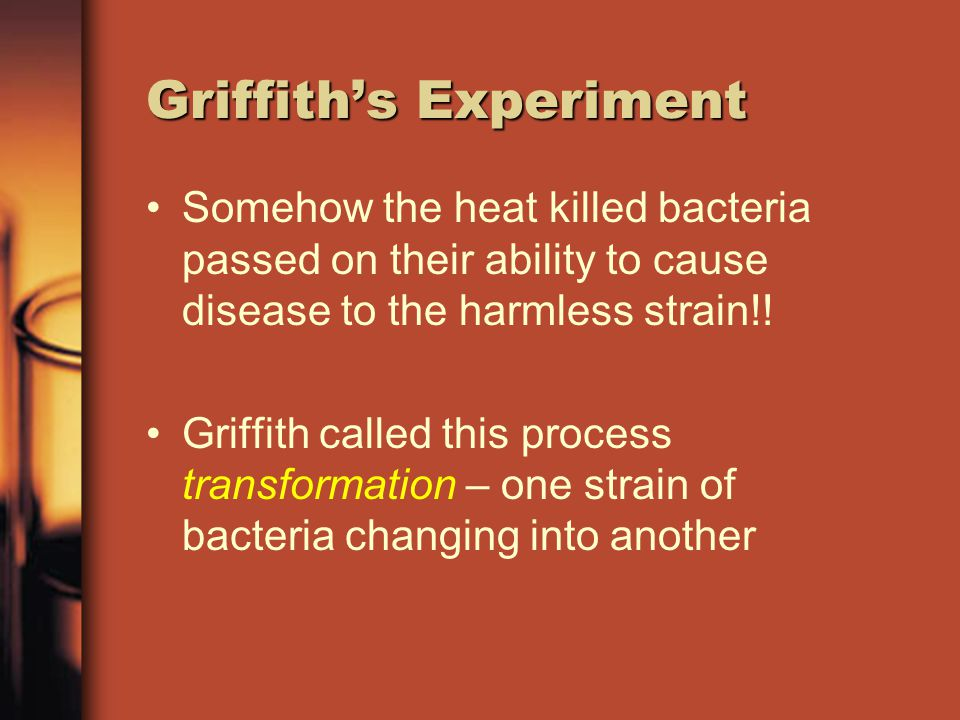 Griffith's Experiment When he injected mice with the heat killed disease- causing bacteria they did not die –When he added the harmless bacteria to the heat killed bacteria they did develop pneumonia and die!