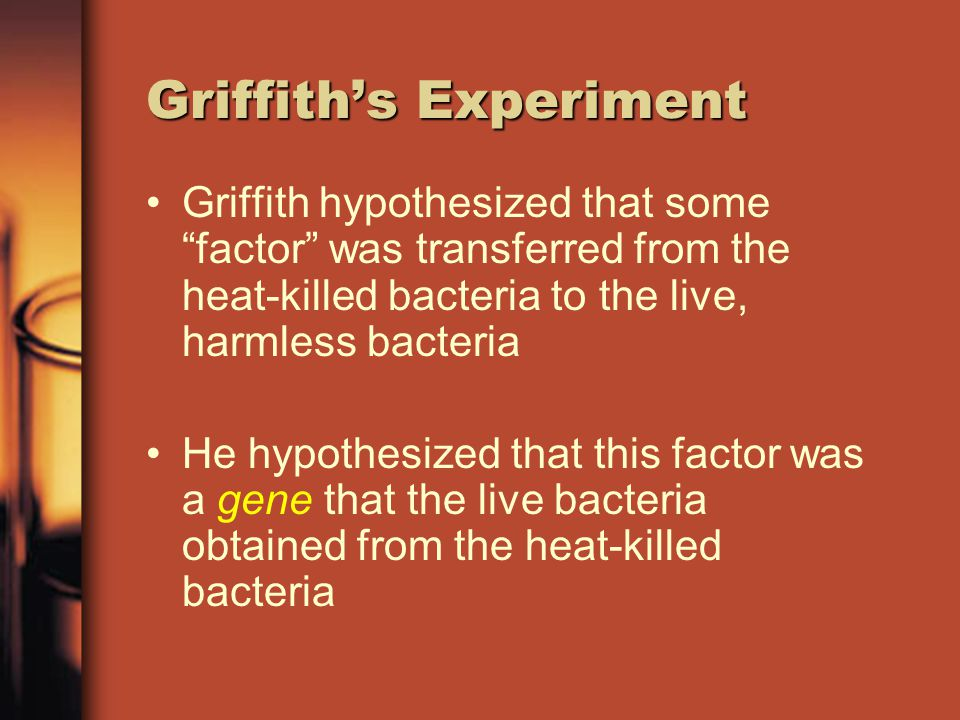 Griffith's Experiment Somehow the heat killed bacteria passed on their ability to cause disease to the harmless strain!.