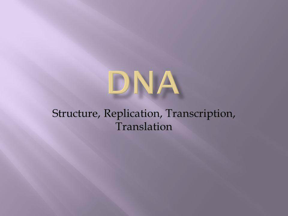 Structure, Replication, Transcription, Translation