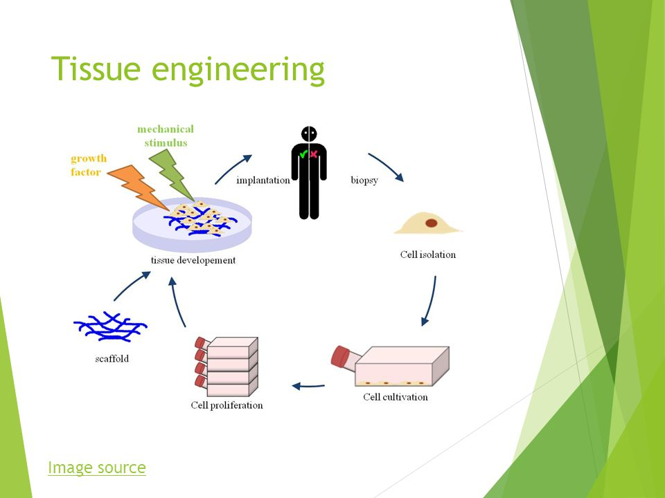 Tissue engineering Image source