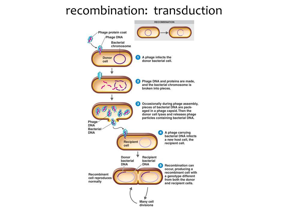 recombination: transduction
