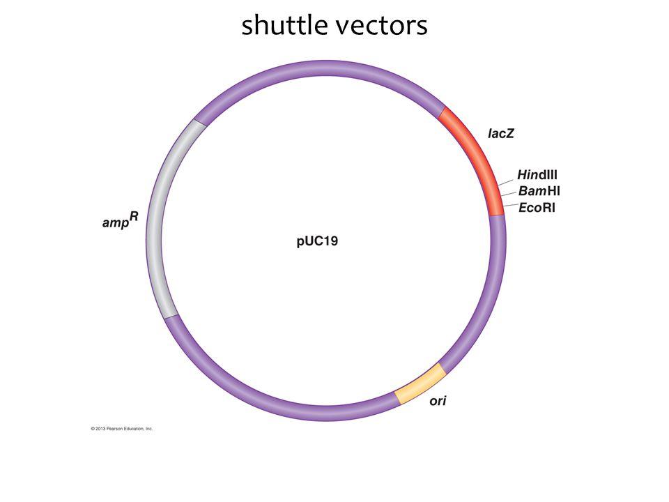 shuttle vectors