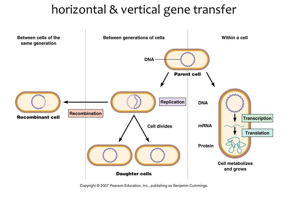 horizontal & vertical gene transfer