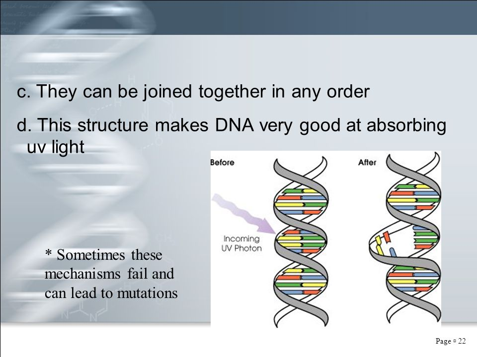 Page  22 c. They can be joined together in any order d. This structure makes DNA very good at absorbing uv light * Sometimes these mechanisms fail an