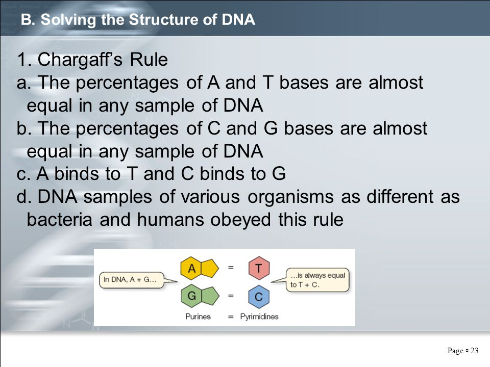 Page  23 B. Solving the Structure of DNA 1. Chargaff's Rule a. The percentages of A and T bases are almost equal in any sample of DNA b. The percenta