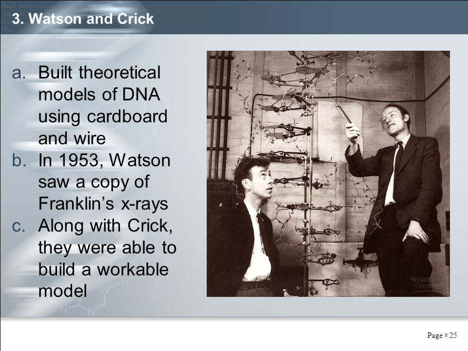 Page  25 3. Watson and Crick a.Built theoretical models of DNA using cardboard and wire b.In 1953, Watson saw a copy of Franklin's x-rays c.Along wit