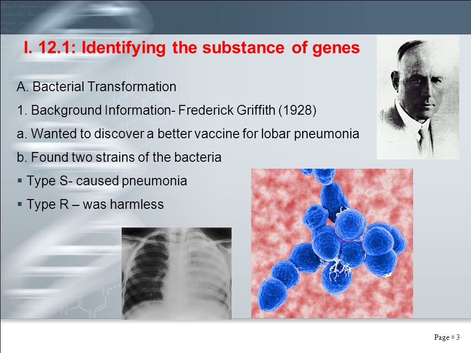 Page  3 I. 12.1: Identifying the substance of genes A. Bacterial Transformation 1. Background Information- Frederick Griffith (1928) a. Wanted to dis