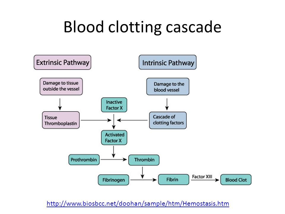 Blood clotting cascade http://www.biosbcc.net/doohan/sample/htm/Hemostasis.htm