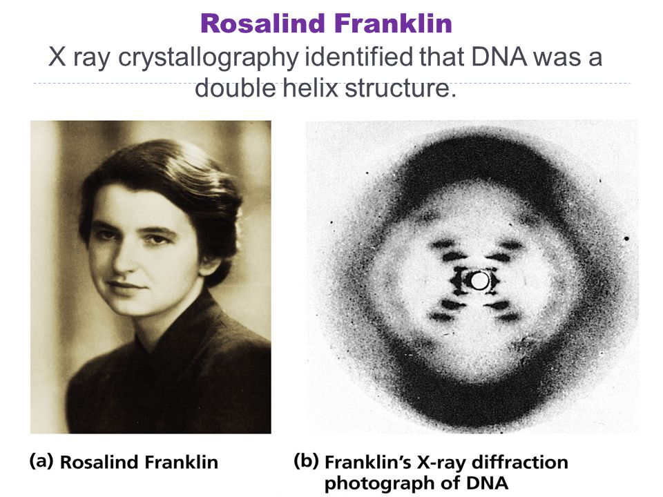 Rosalind Franklin X ray crystallography identified that DNA was a double helix structure.