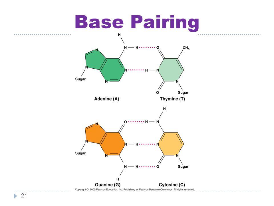 Base Pairing 21