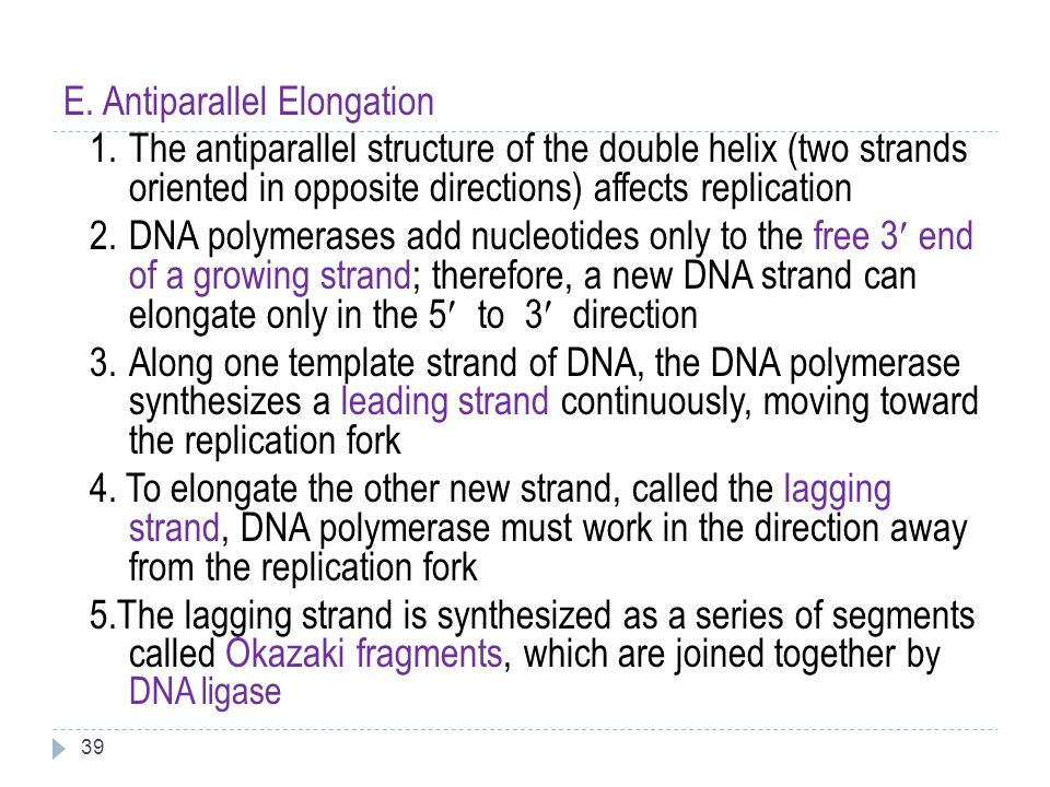 39 E. Antiparallel Elongation 1.The antiparallel structure of the double helix (two strands oriented in opposite directions) affects replication 2.DNA