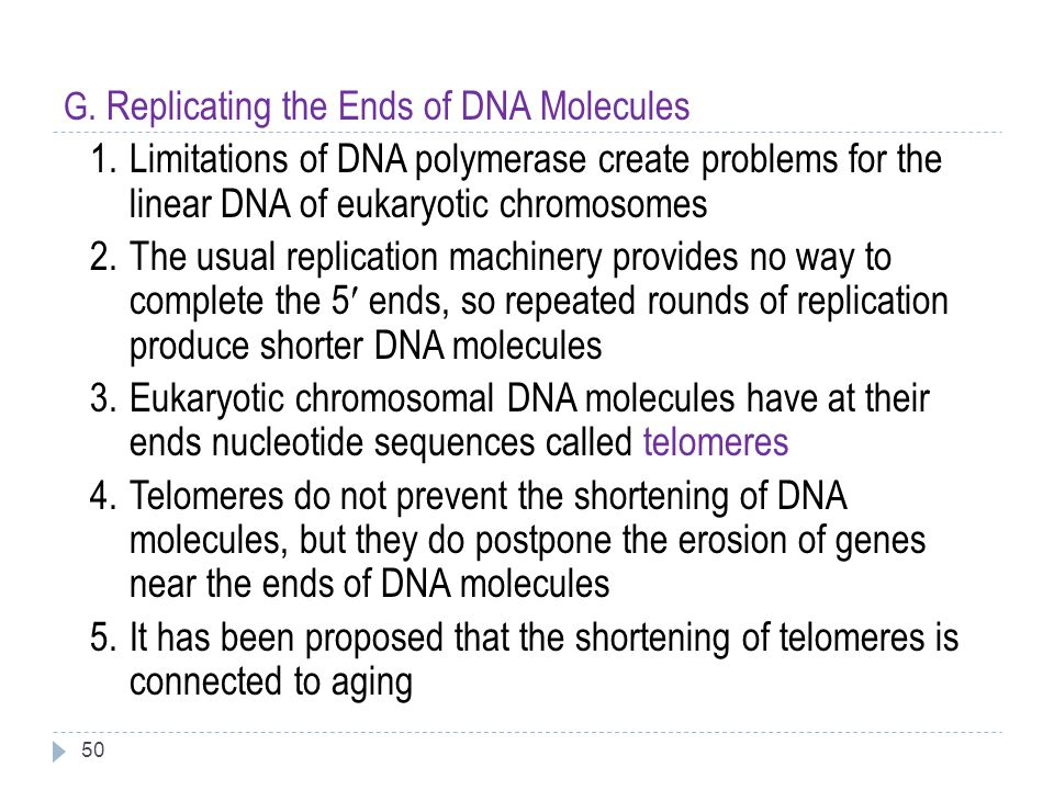 50 G. Replicating the Ends of DNA Molecules 1.Limitations of DNA polymerase create problems for the linear DNA of eukaryotic chromosomes 2.The usual r