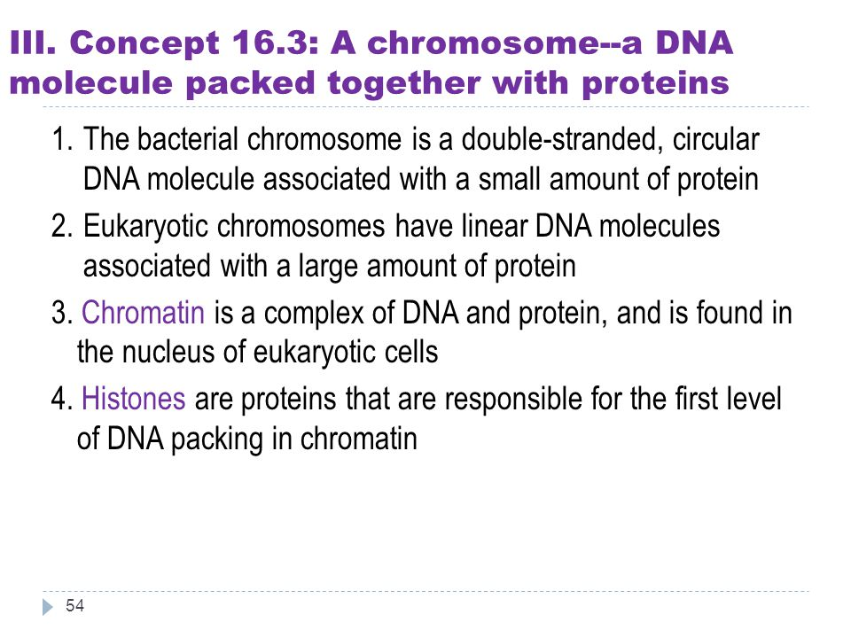III. Concept 16.3: A chromosome--a DNA molecule packed together with proteins 54 1.The bacterial chromosome is a double-stranded, circular DNA molecul