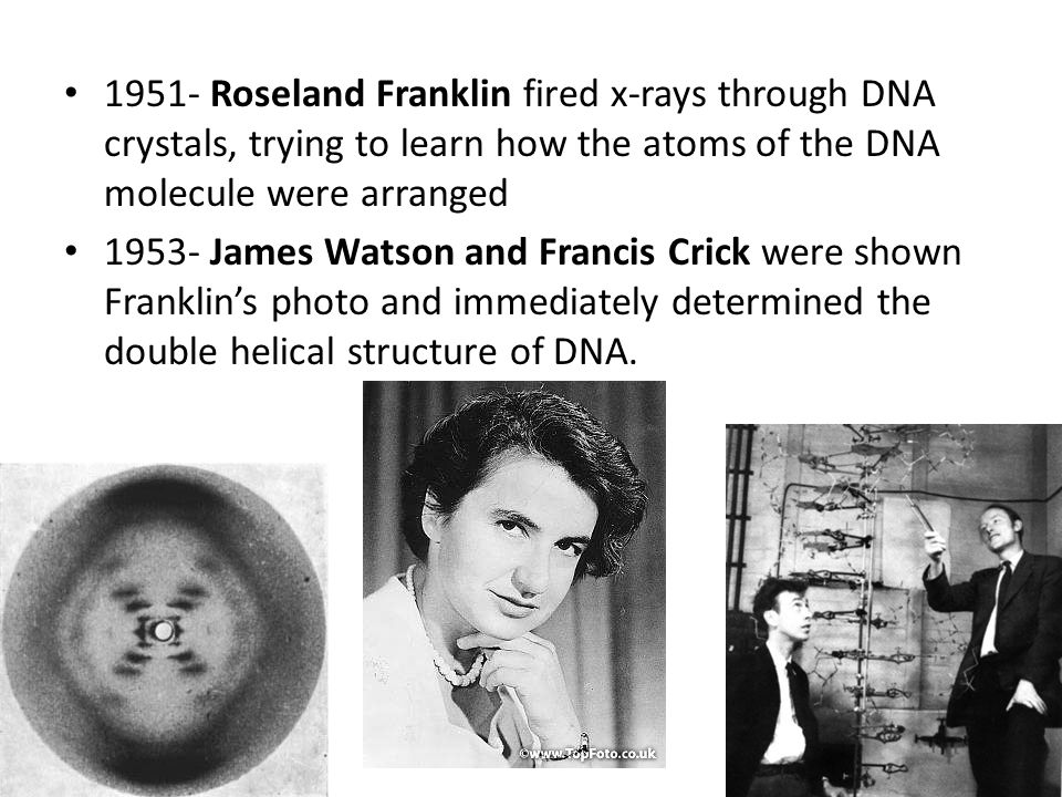 1951- Roseland Franklin fired x-rays through DNA crystals, trying to learn how the atoms of the DNA molecule were arranged 1953- James Watson and Fran
