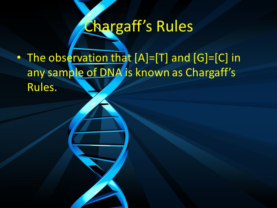 Chargaff's Rules The observation that [A]=[T] and [G]=[C] in any sample of DNA is known as Chargaff's Rules.