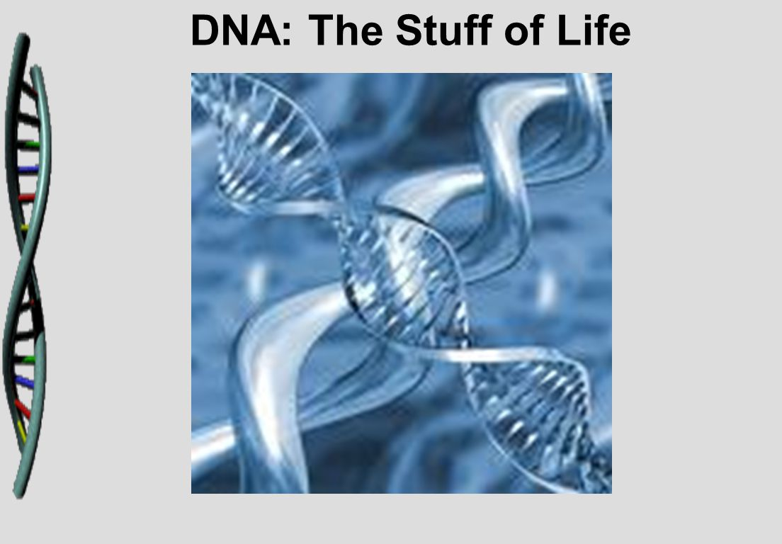 DNA: The Stuff of Life