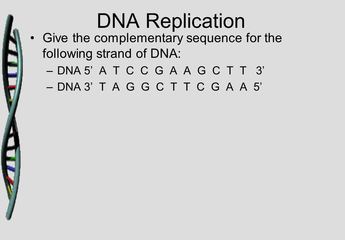 DNA Replication Give the complementary sequence for the following strand of DNA: –DNA 5' A T C C G A A G C T T 3' –DNA 3' T A G G C T T C G A A 5'