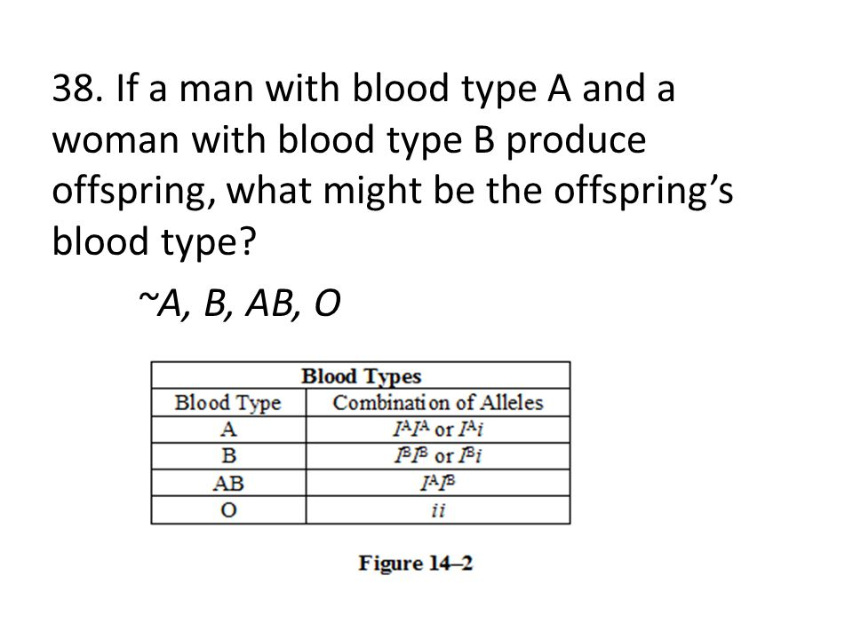 38. If a man with blood type A and a woman with blood type B produce offspring, what might be the offspring's blood type? ~A, B, AB, O