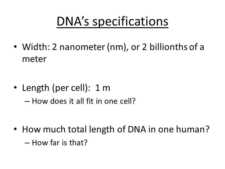 DNA's specifications Width: 2 nanometer (nm), or 2 billionths of a meter Length (per cell): 1 m – How does it all fit in one cell.