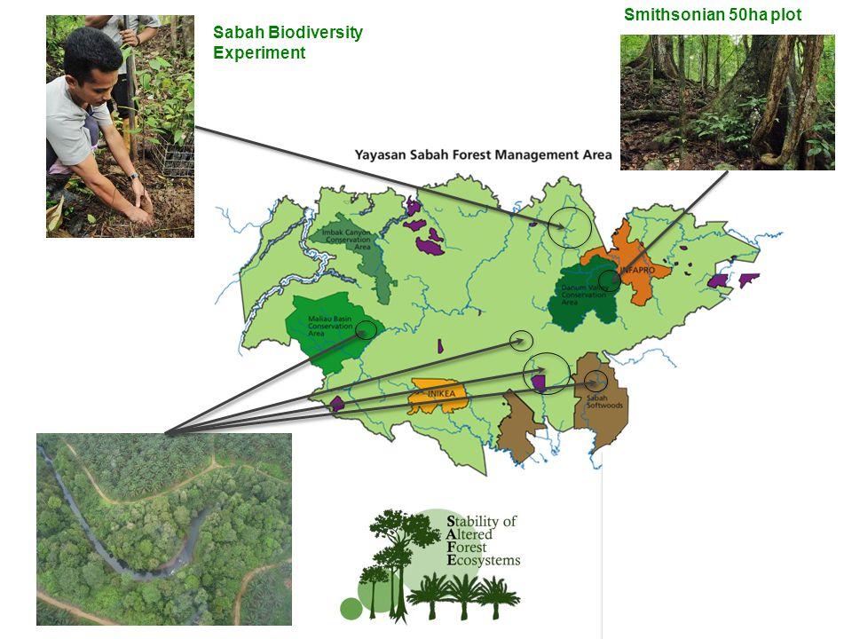 Sabah Biodiversity Experiment Smithsonian 50ha plot