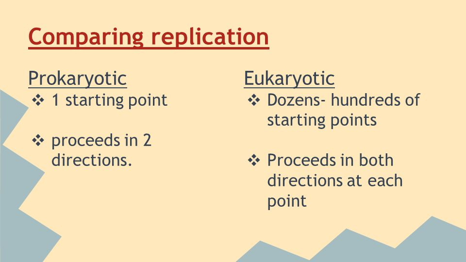 Comparing replication Prokaryotic ❖ 1 starting point ❖ proceeds in 2 directions.