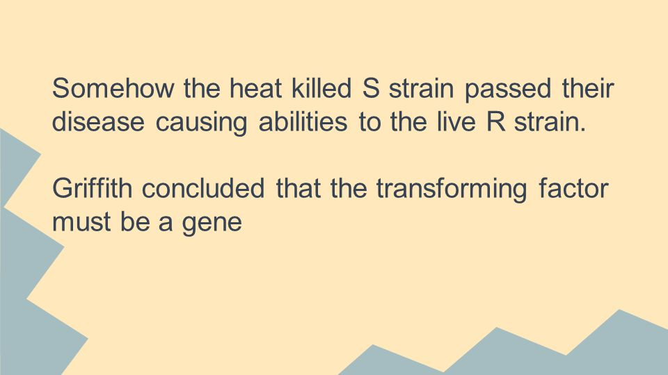 Somehow the heat killed S strain passed their disease causing abilities to the live R strain.