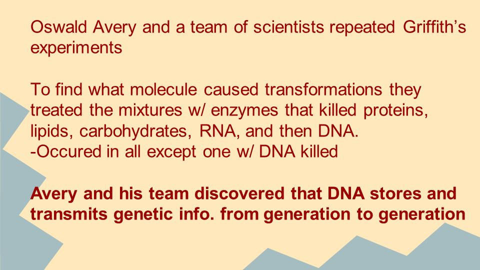 Oswald Avery and a team of scientists repeated Griffith's experiments To find what molecule caused transformations they treated the mixtures w/ enzymes that killed proteins, lipids, carbohydrates, RNA, and then DNA.