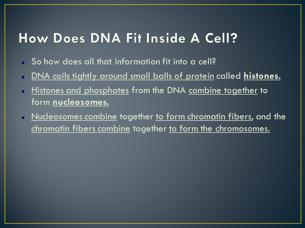 So how does all that information fit into a cell.
