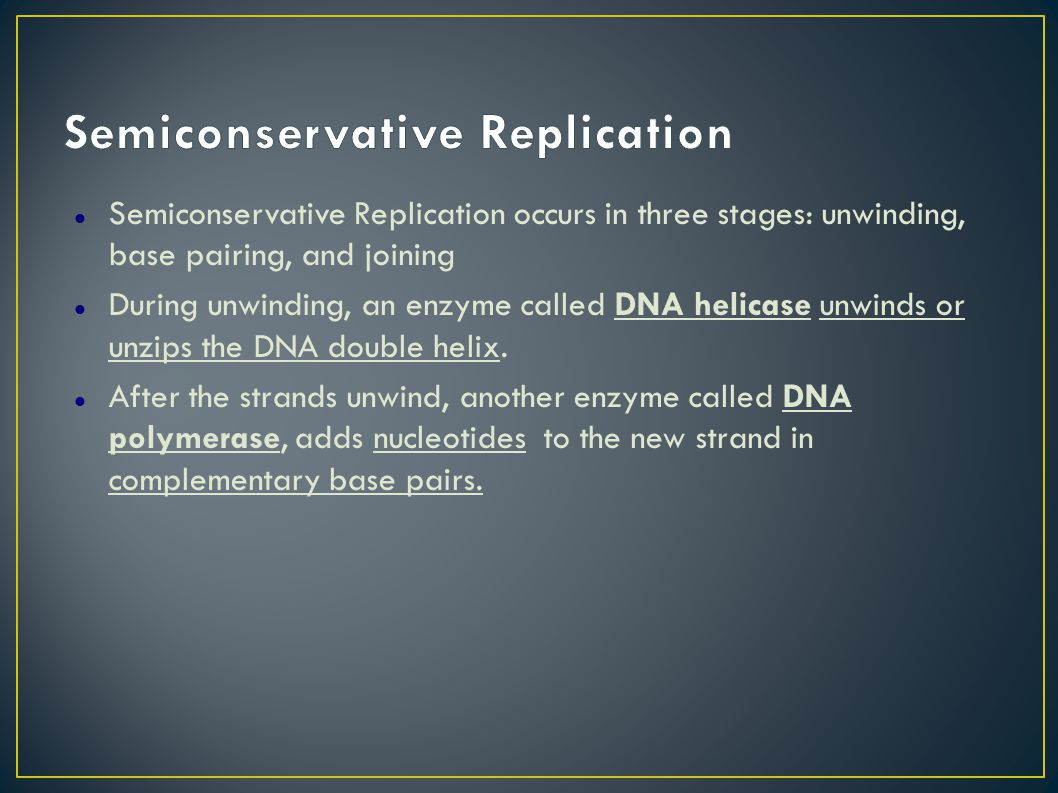 Semiconservative Replication occurs in three stages: unwinding, base pairing, and joining During unwinding, an enzyme called DNA helicase unwinds or unzips the DNA double helix.