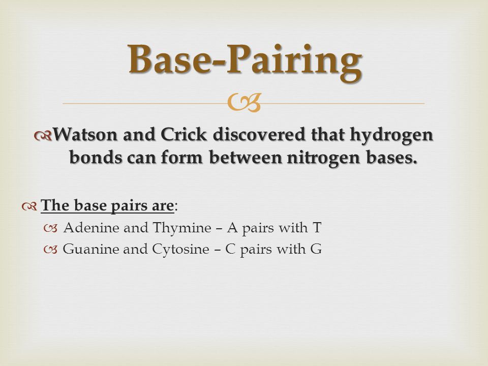  WWWWatson and Crick discovered that hydrogen bonds can form between nitrogen bases. TThe base pairs are : AAdenine and Thymine – A pairs wit