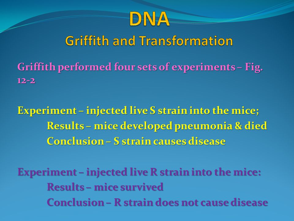 Griffith performed four sets of experiments – Fig. 12-2 Experiment – injected live S strain into the mice; Results – mice developed pneumonia & died C