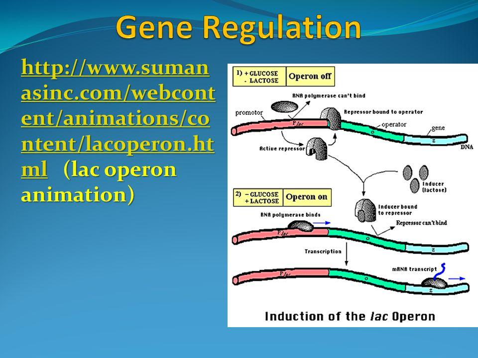 http://www.suman asinc.com/webcont ent/animations/co ntent/lacoperon.ht mlhttp://www.suman asinc.com/webcont ent/animations/co ntent/lacoperon.ht ml (lac operon animation) http://www.suman asinc.com/webcont ent/animations/co ntent/lacoperon.ht ml