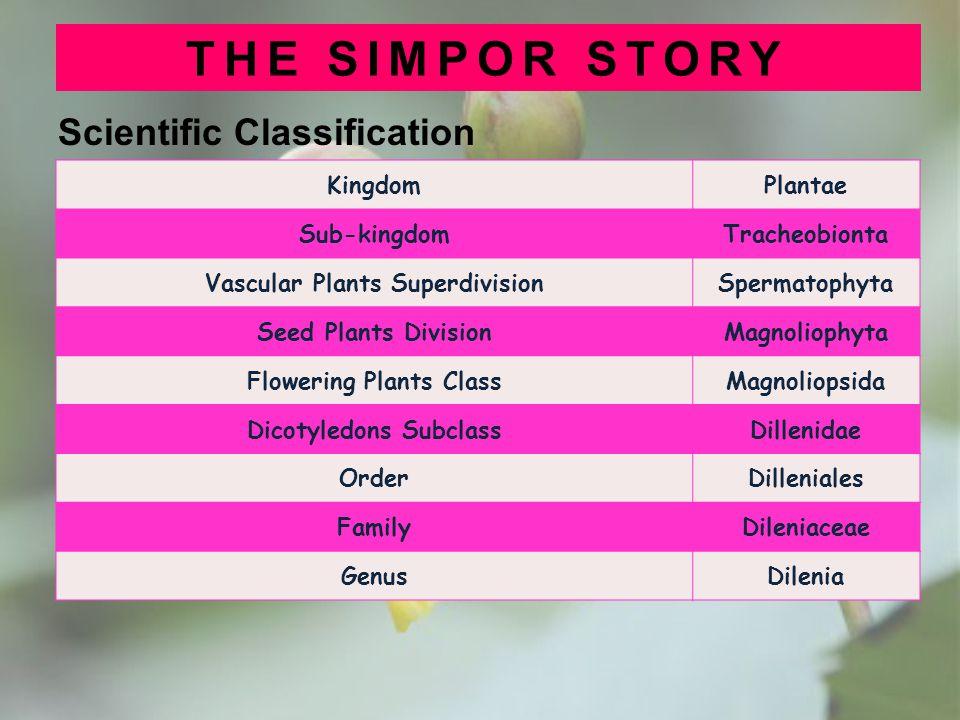 Scientific Classification THE SIMPOR STORY KingdomPlantae Sub-kingdomTracheobionta Vascular Plants SuperdivisionSpermatophyta Seed Plants DivisionMagn
