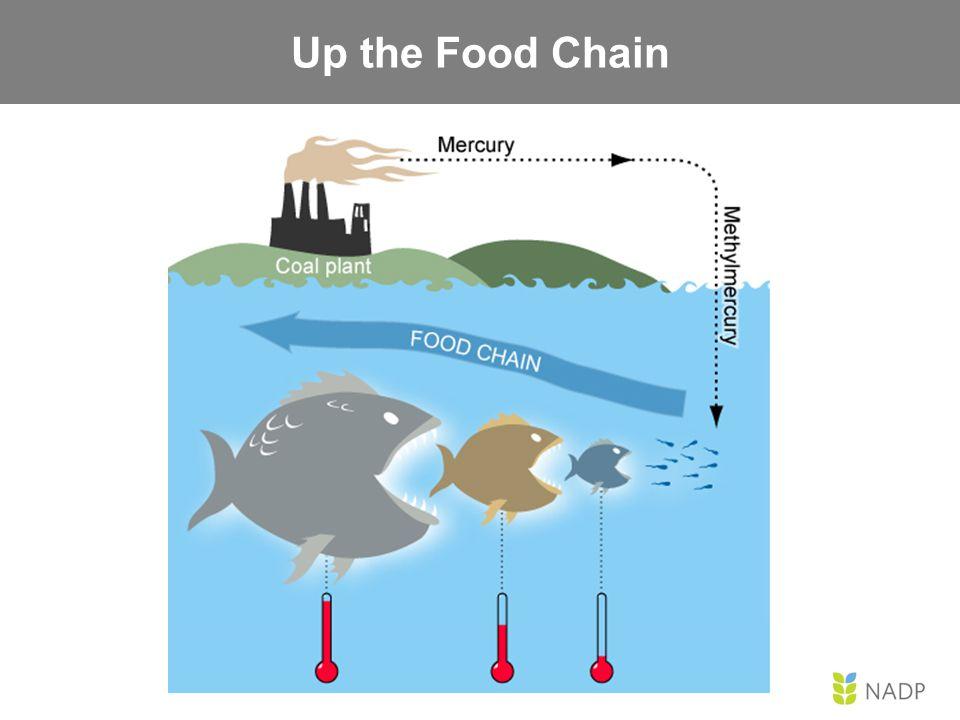 The Aquatic Mercury Cycle Food Chain